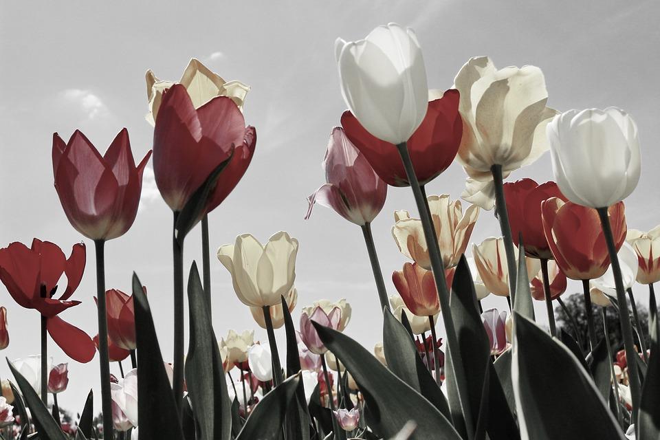 В Краснодаре суд вынес приговор мужчине, который убил прохожего из-за тюльпанов
