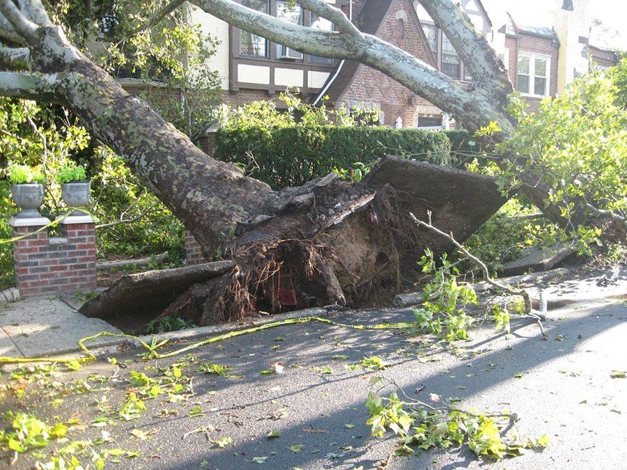 В Сочи на многоэтажку упало 40-метровое дерево