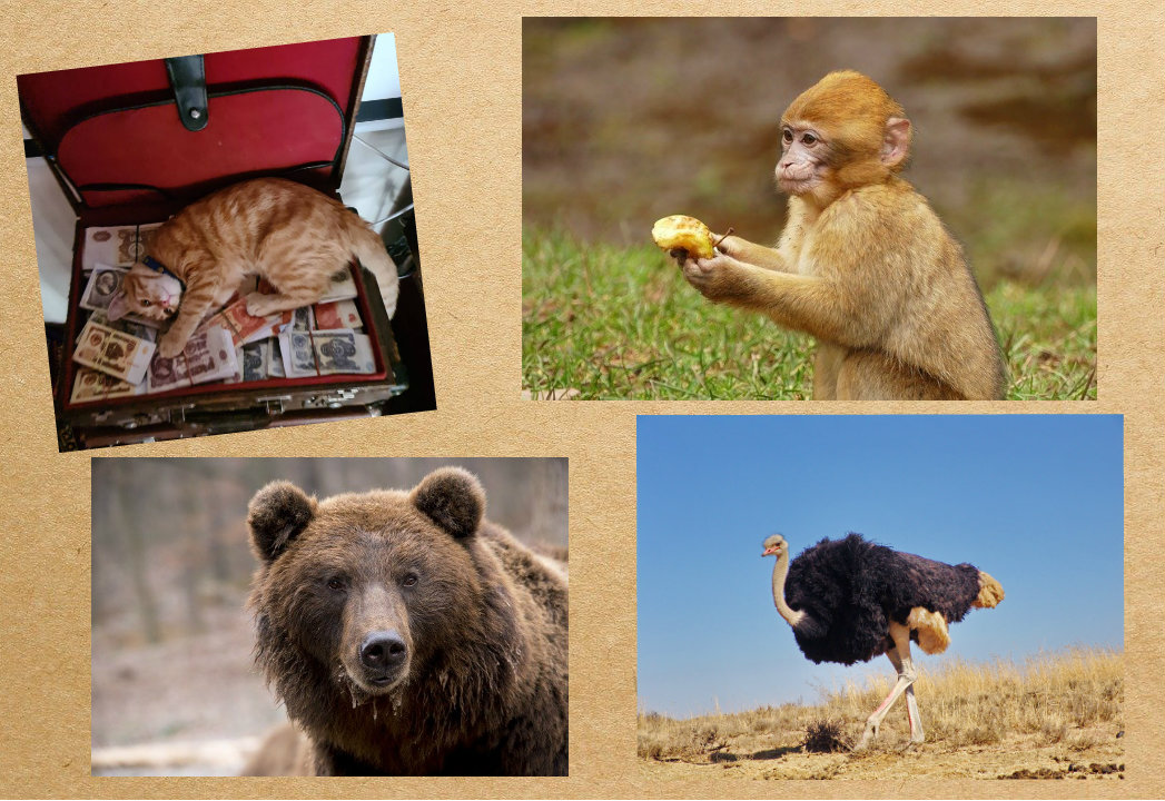 Животные чудят: забавные истории, которые приключились в 2020 году на Кубани