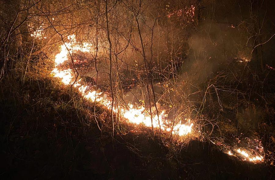 Росприроднадзор заявил о низком уровне пожарной безопасности в нацпарке Сочи