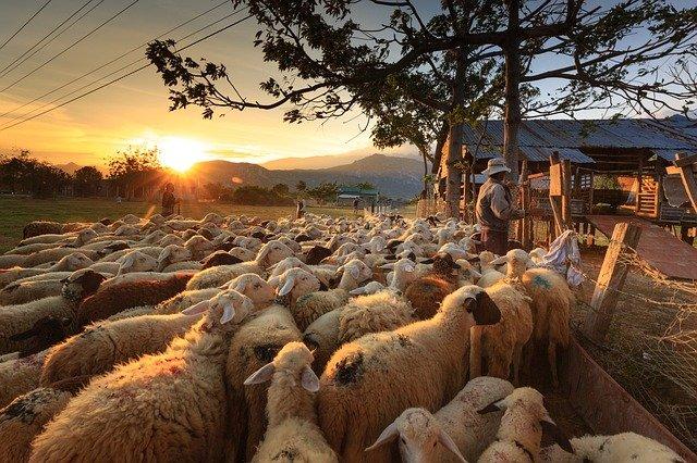 Более 130 тонн овечьих шкур возвращены в Австралию из Новороссийска