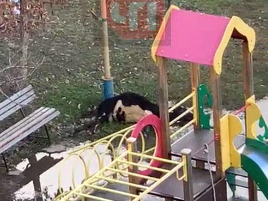 В Сочи на детской площадке теленка убило ударом тока