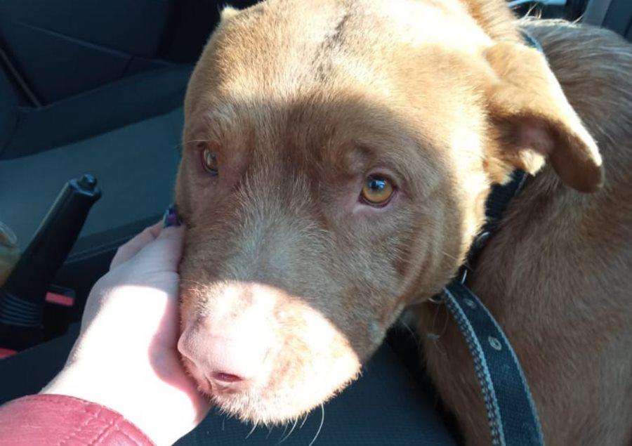 В Анапе брошенная собака полгода прождала хозяев у аэропорта