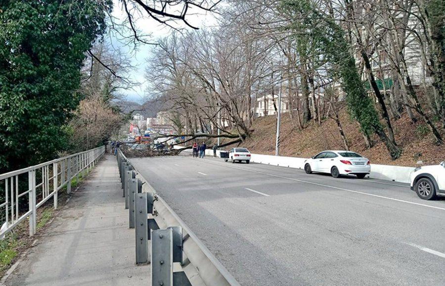 В Сочи на трассу рухнуло дерево, парализовав движение транспорта