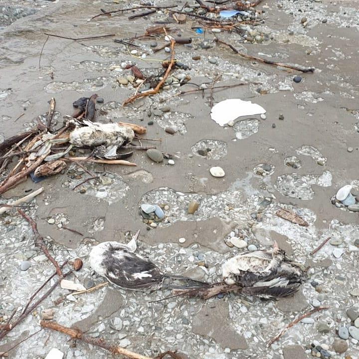 В администрации Геленджика сообщили, что на курорте от холода гибнут птицы