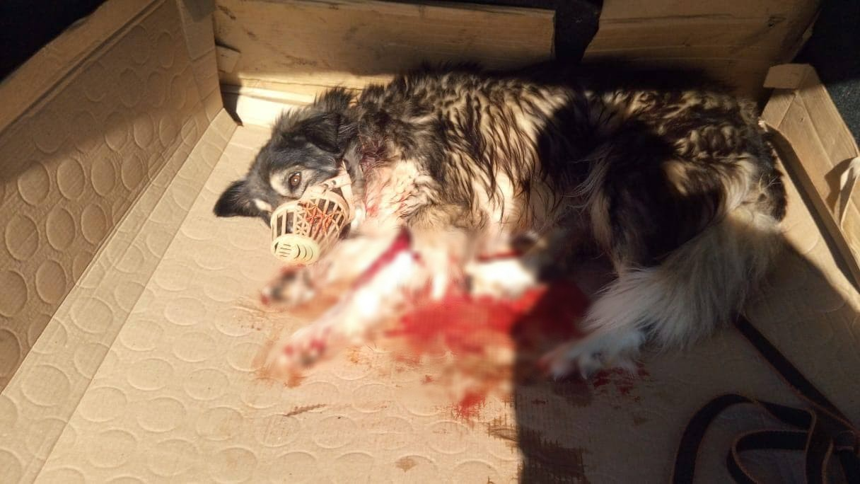 Под Горячим Ключом собака пришла на помощь расстрелянному псу