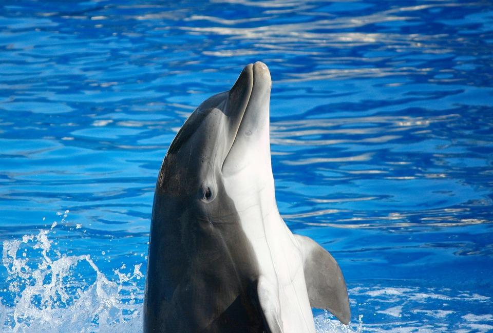 Бизнесмен из Краснодара незаконно вывез редких дельфинов в Королевство Марокко