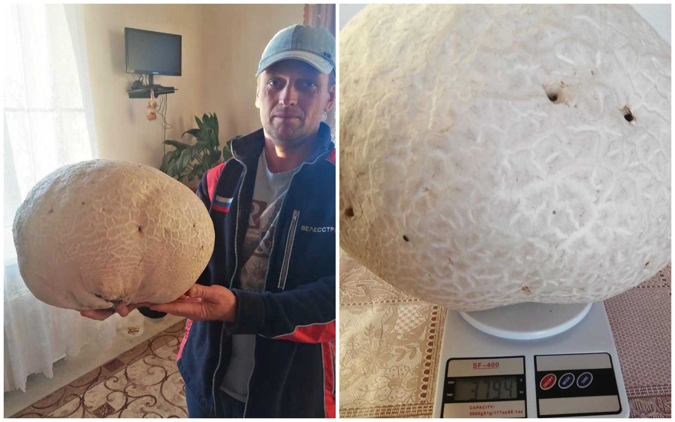 Под Армавиром грибники нашли гигантский гриб