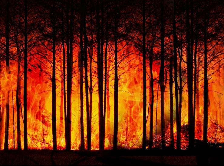 С виновника лесного пожара в Туапсе взыщут более 890 тысяч рублей