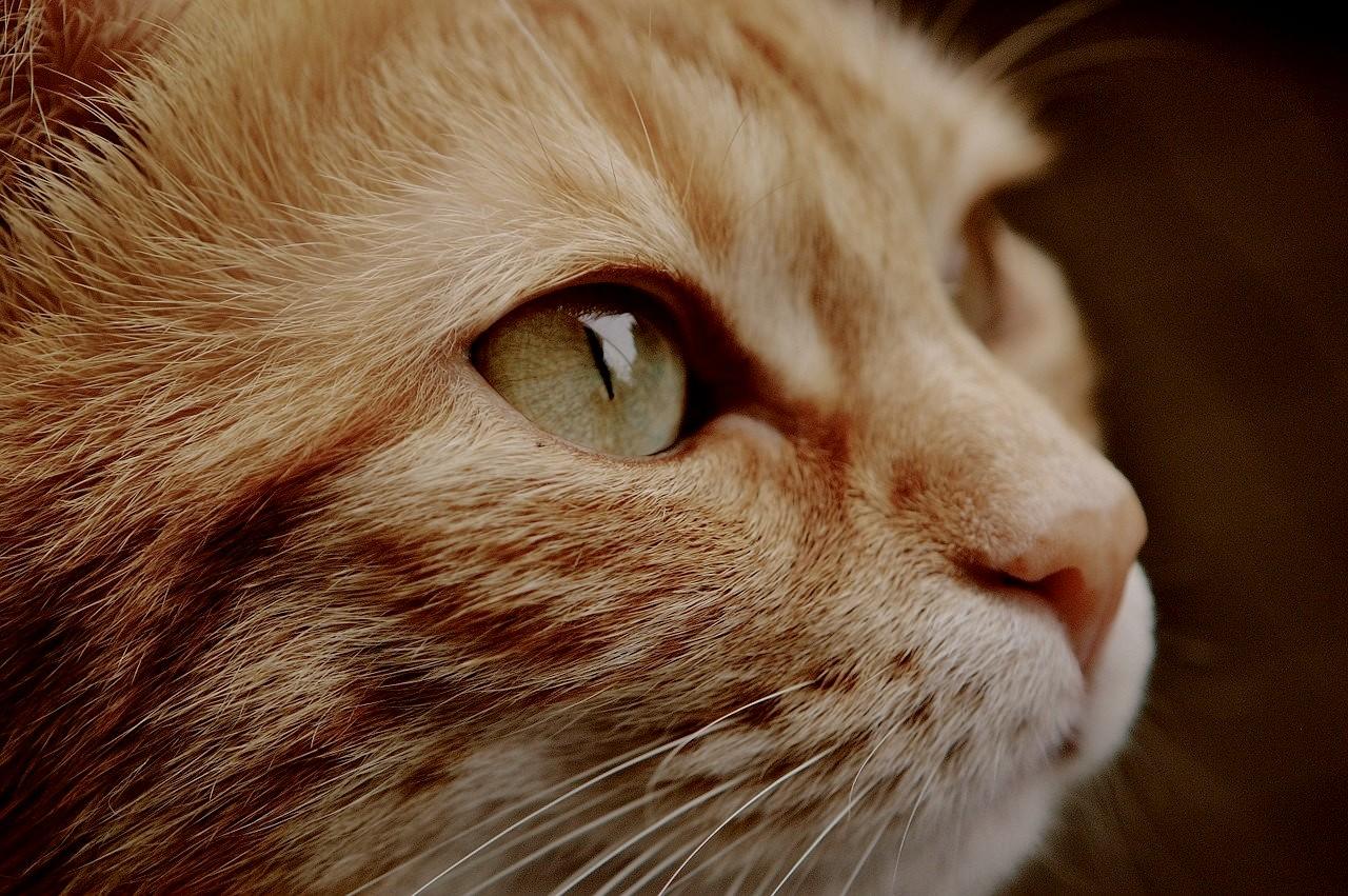 В Краснодаре неизвестный сжег двух кошек, возбуждено уголовное дело