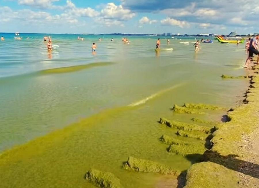 Ученые разработают методы борьбы с водорослями на побережье Анапы