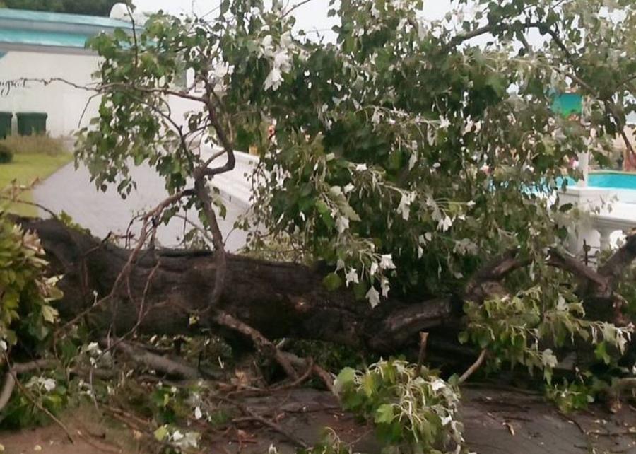 В Геленджике из-за сильного ветра рухнуло два дерева