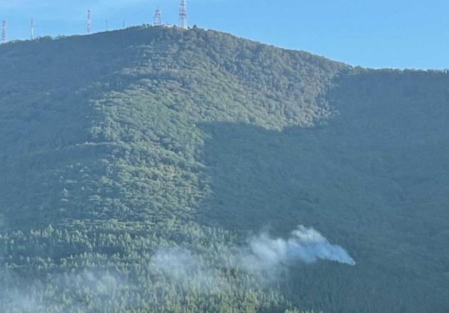 В Геленджике горит лес на площади 2 га