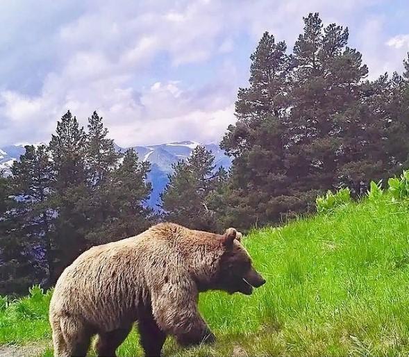 Сотрудники Кавказского заповедника не нашли доказательств нападения медведей на туристов