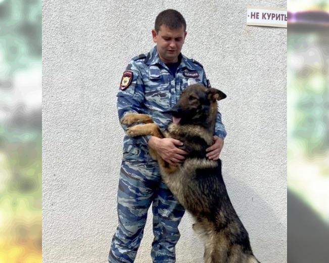 На Кубани служебный пес Шторм нашел пропавшую четвероклассницу