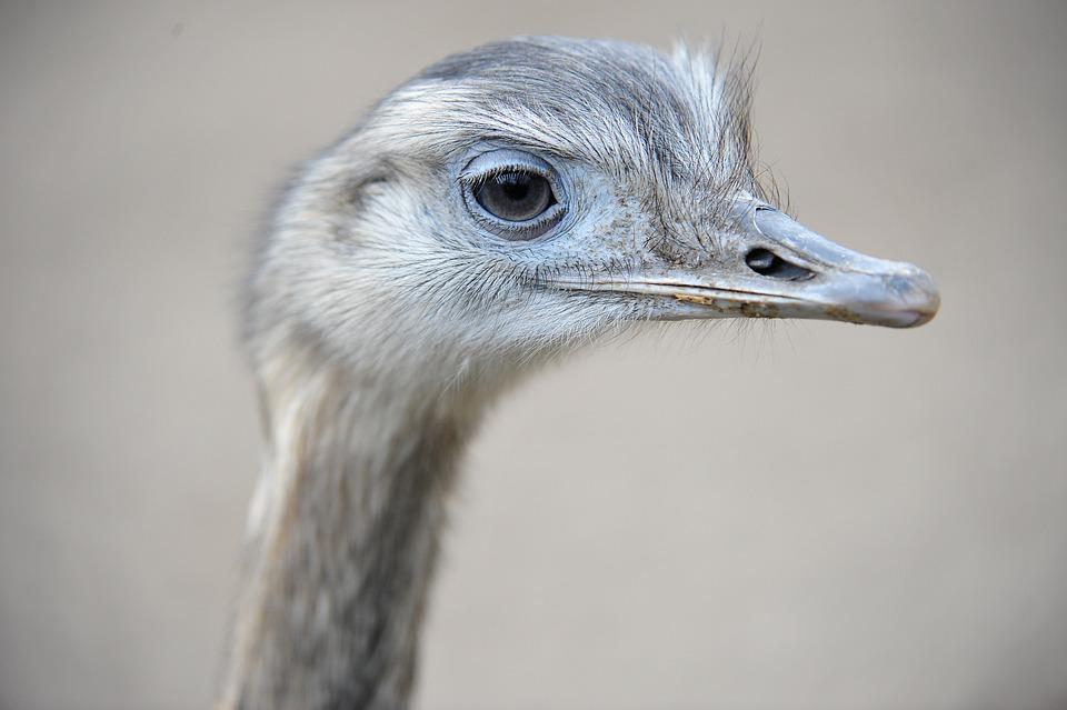 Стало известно о состоянии страусов, над которыми издевались посетители парка в Славянске-на-Кубани